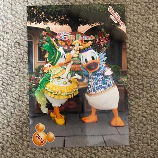 ディズニー(Disney)のミニーのトロピカルスプラッシュ ドナルド デイジー スペシャルフォト(写真)