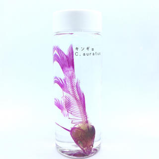 透明標本 キンギョ2(置物)