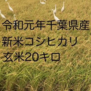 コシヒカリ玄米20キロ