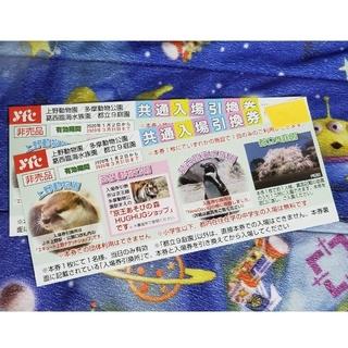上野動物園 多摩動物公園 共通入場引換券2枚