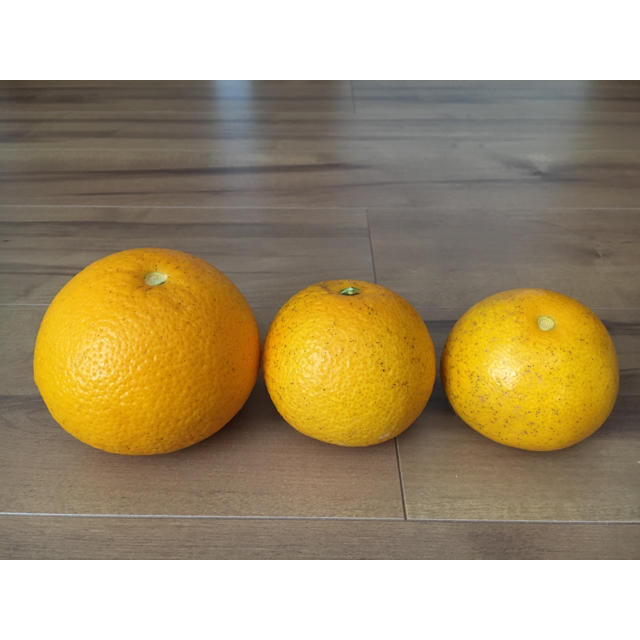 和歌山 はっさく宅急便コンパクト ご家庭用 食品/飲料/酒の食品(フルーツ)の商品写真