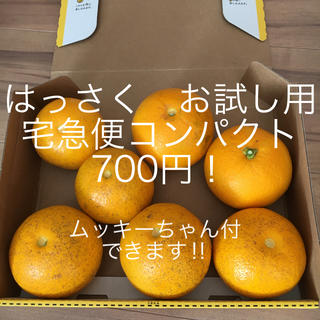 和歌山 はっさく宅急便コンパクト ご家庭用(フルーツ)