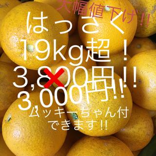 和歌山 はっさく19kg超 ご家庭用(フルーツ)