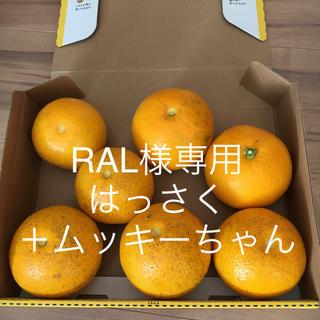 和歌山 はっさく ご家庭用 ムッキーちゃん(フルーツ)