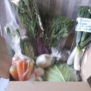 すべてお任せ野菜詰め合わせ60サイズ