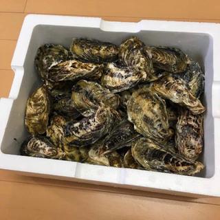 お買い得☆殻付き牡蠣☆3キロ