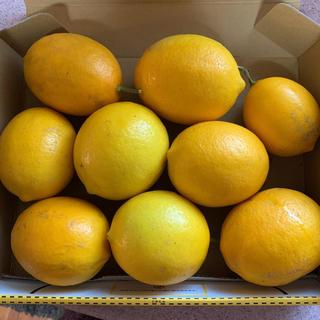 無農薬、有機栽培レモン