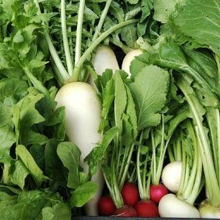 無農薬野菜6種セット100サイズ