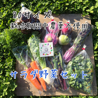 【栽培期間中農薬不使用】シャキシャキ!みずみずし 旬彩野菜サラダセット(野菜)