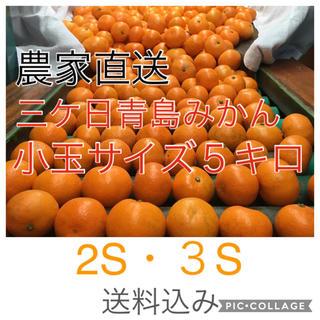 訳あり三ケ日青島みかん 2S・3S  5キロ !(箱の重さ込み)