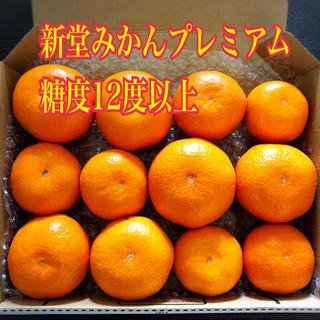 新堂みかんプレミアム 大津4号(晩生)