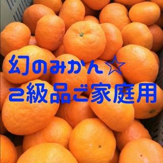 希少高級柑橘 レッドウインク 幻のみかん 5㎏ 訳あり(フルーツ)