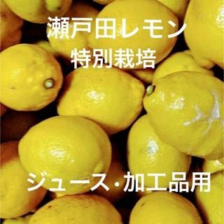 瀬戸田レモン 特別栽培 訳あり品 箱込み5キロ