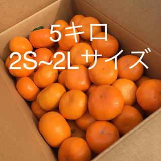 大津みかん 5キロ 家庭用2S~2L