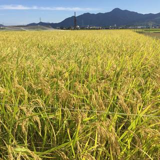 長野県産 天日干しコシヒカリ精米10kg(米/穀物)