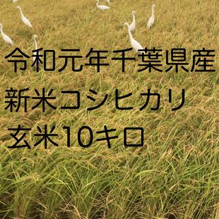 コシヒカリ玄米10キロ