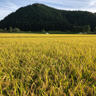 秋田県産(2019年)あきたこまち 玄米 30キロ 一等米