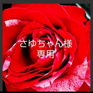 ワコール(Wacoal)のサルート♡17G 黄龍 D65 ソング(ブラ&ショーツセット)