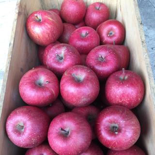 鮮度に自信あり!青森県産りんご サンふじ 5キロ