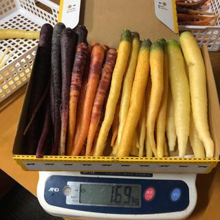 彩りフルーツにんじん先行販売。訳ありB品1.6kg以上。無農薬野菜(野菜)