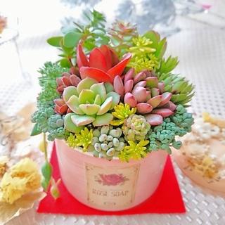 多肉植物 贅沢寄せ植え ピンクベージュ×アンティークラベル すぐ飾れる◎(その他)