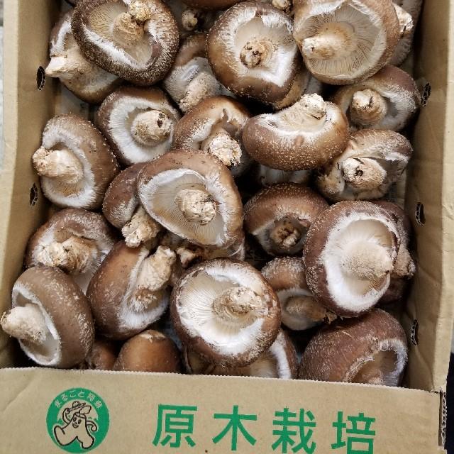 熊本の原木生椎茸 700g 食品/飲料/酒の食品(野菜)の商品写真