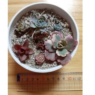 多肉植物☆彡6種☆彡オマケつき(プランター)