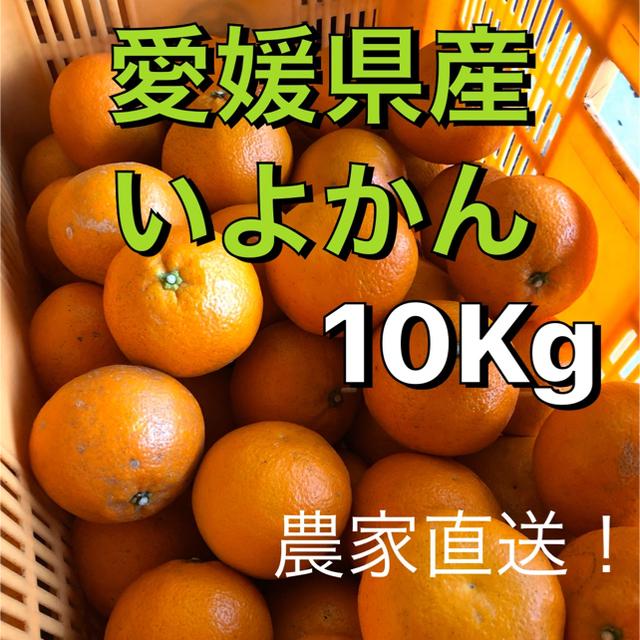 愛媛県産みかん 伊予柑10Kg 送料無料 食品/飲料/酒の食品(フルーツ)の商品写真