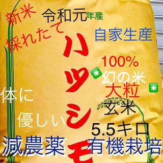 ✳️令和元年✳️ハツシモ有機玄米5.5キロ精米