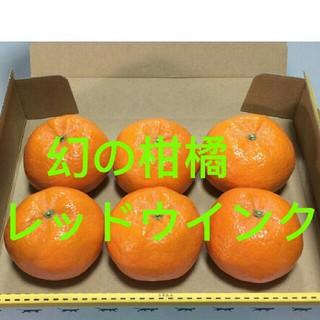 希少高級柑橘 レッドウインク 幻のみかん お試し用(フルーツ)