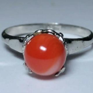 本赤珊瑚シルバーリング~ネックレス(リング(指輪))