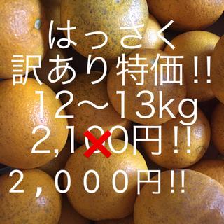 はっさく 訳あり12〜13kg ご家庭用(フルーツ)