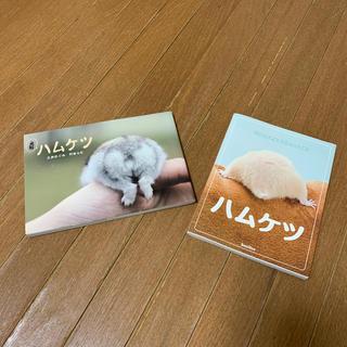 元祖ハムケツ ハムケツ 2冊(その他)