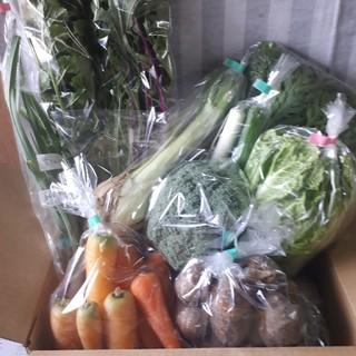 お任せ野菜詰め合わせ60サイズ(農薬不使用栽培)(野菜)