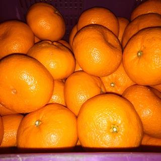 和歌山県有田産 大玉みかん 10kg(フルーツ)