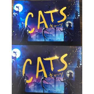 cats ポストカード 2枚