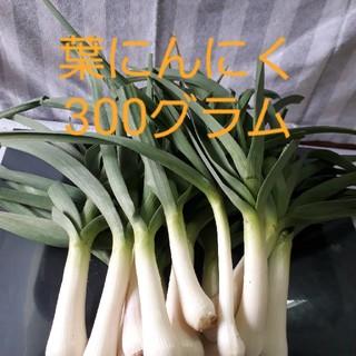 福岡産葉にんにく300グラム(農薬不使用栽培)(野菜)