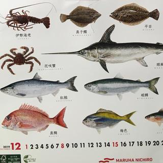 お魚カレンダー2020(カレンダー/スケジュール)