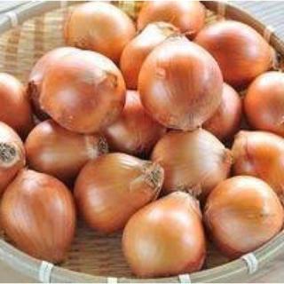 北海道玉ねぎ(野菜)