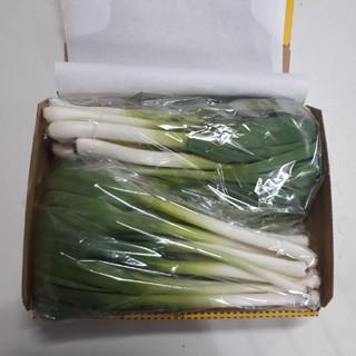 葉にんにく500グラム(コンパクト)(野菜)
