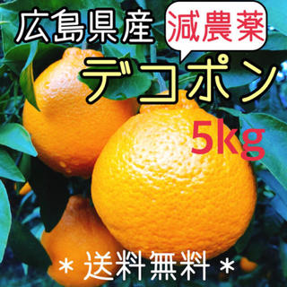 減農薬 もぎたて デコポン 5キロ ノーワックス 広島県産 大崎上島 数量限定(フルーツ)