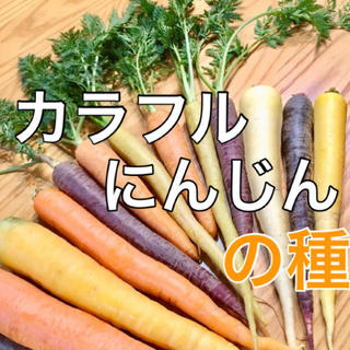 【話題の野菜の種】カラフルにんじんの種 50粒 家庭菜園 タネ ニンジン 人参(野菜)