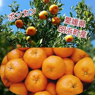 愛媛県明浜町産 ポンカン 10キロ