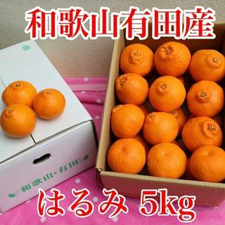 和歌山有田産 はるみ 5kg(野菜)