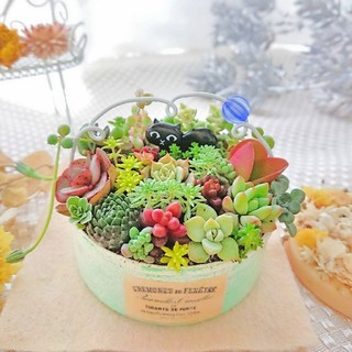 専用◆多肉植物 多肉寄せ植え 黒猫にゃんこ(ФωФ)×ソフトグリーンリメ鉢 (その他)