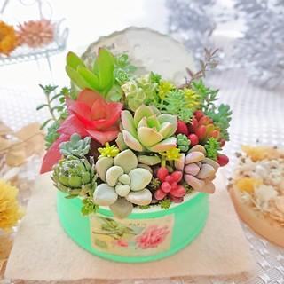 専用◆ 多肉寄せ植え 蓋つき グリーンアップル×ローズラベルリメ鉢(その他)