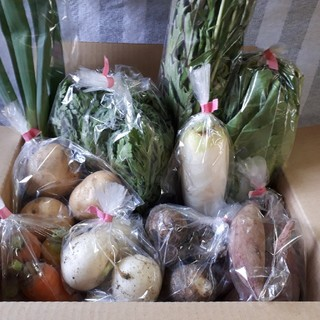 お任せ野菜詰め合わせ60サイズ(野菜)