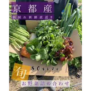 新鮮野菜をお届け!80サイズ 京都 露地栽培 新鮮野菜詰め合わせ!!(野菜)