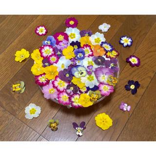 お花屋さんが作った春色プリムラ20冠と彩りビオラ50冠の山盛り70冠‼️(ドライフラワー)
