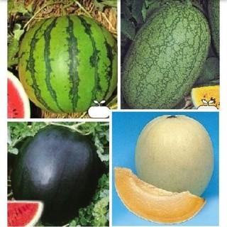 スイカ種メロン種●新大和二号 嘉宝西瓜 シュガーベイビー ハニーオレンジ(野菜)